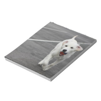 Cute dog on a notepad