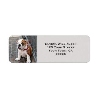 Cute dog return address label
