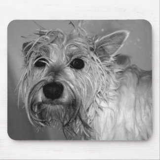 Cute Dog - Westie (West Highland Terrier) Mouse Pad