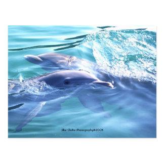 Cute Dolphins Photo Postcard