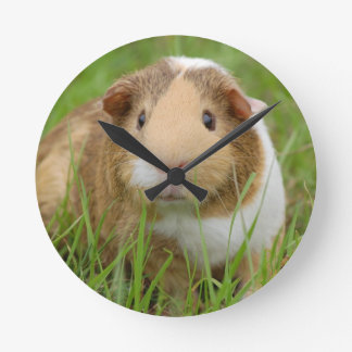Cute Domestic Guinea Pig Clock