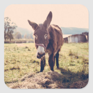 Cute Donkey Sticker