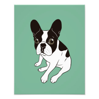 Cute double hooded pied Frenchie is chilling Photo Print