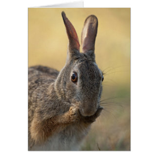 Cute Eastern Cottontail Rabbit Photo - Wildlife Card