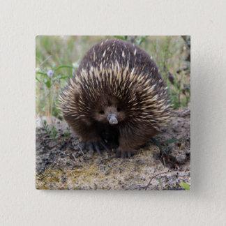 Cute Echidna from Australia 15 Cm Square Badge