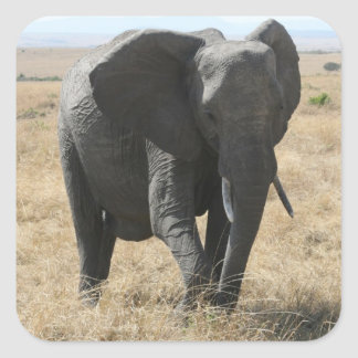 cute elephant square sticker