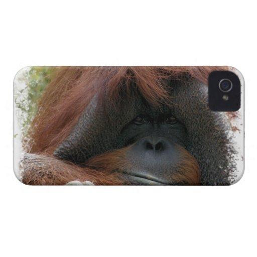 Cute Endangered Orangutan Photo Blackberry Bold Case