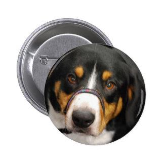 Cute Entlebucher Mountain Dog Button