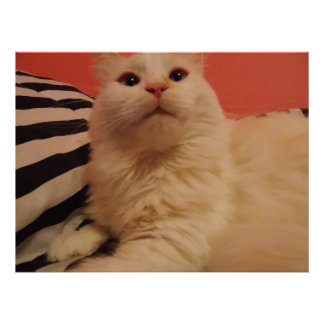 Cute Expression Cat Poster