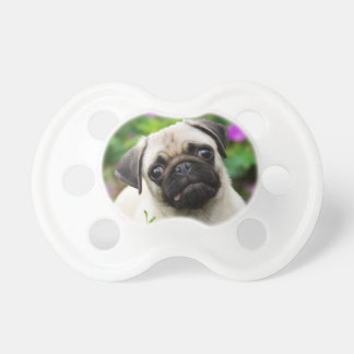 Cute Fawn Colored Pug Puppy Dog Face Pet Photo -. Dummy