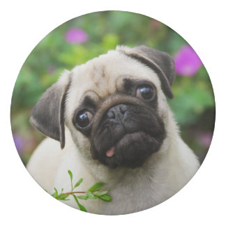 Cute Fawn Colored Pug Puppy Dog Face Pet Photo ; Eraser