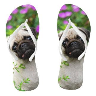 Cute fawn pug puppy thongs