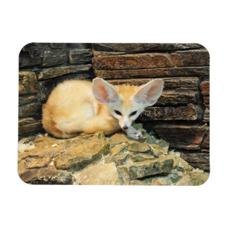 Cute fennec fox magnet