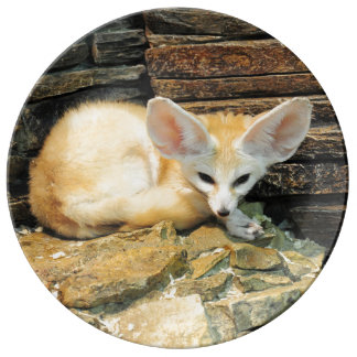 Cute fennec fox plate