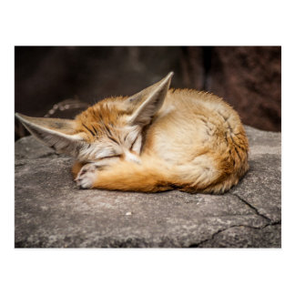 Cute Fennec Fox Postcard