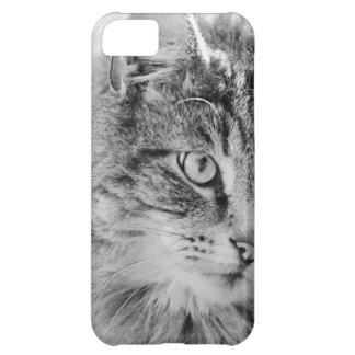 Cute Fluffy Cat Face iPhone 5C Case