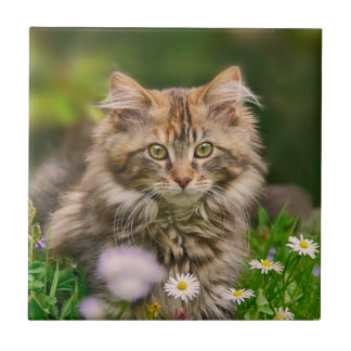 Cute Fluffy Maine Coon Kitten Cat Animal Photo --- Small Square Tile
