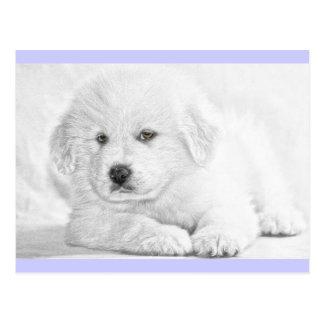 Cute Fluffy White Puppy Postcard