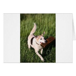 Cute fox terrier fetching block of wood greeting card