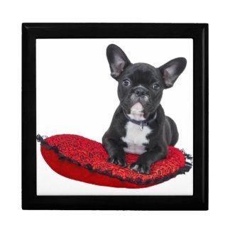 Cute french bulldog on pillow gift box