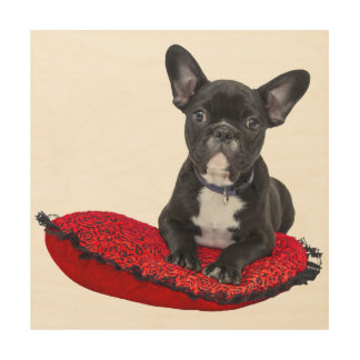 Cute french bulldog on pillow wood print