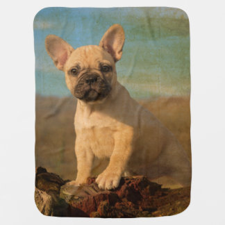 Cute French Bulldog puppy, vintage Pram blankets