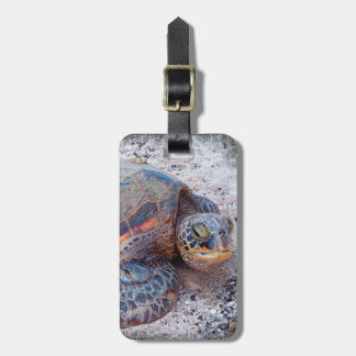 Cute, Friendly Hawaiian Sea Turtle Close-up Photo Luggage Tag