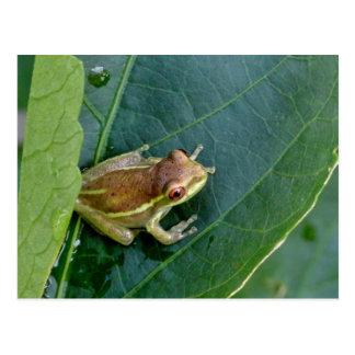 Cute frog postcard