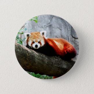 cute funny animal red panda 6 cm round badge