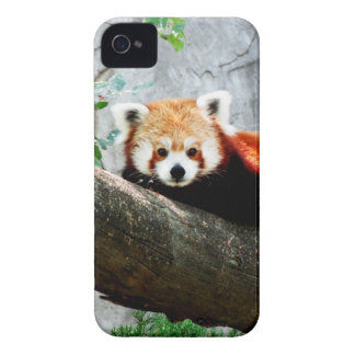 cute funny animal red panda iPhone 4 Case-Mate case