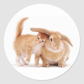 cute_funny_animals_8  kitten bunny rabbit friends classic round sticker