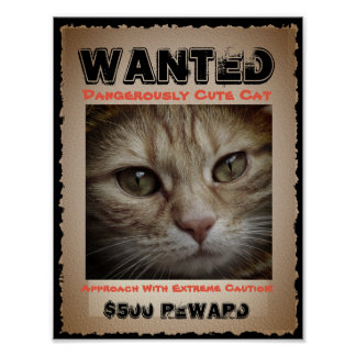 Cute Funny Cat Wanted Picture Poster