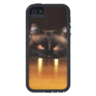 Cute, funny, vampire cat iPhone 5 cases