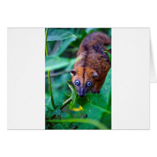 Cute furry cuscus possum looking at camera card