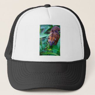 Cute furry cuscus possum looking at camera trucker hat