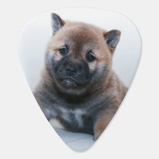 Cute Fuzzy Puppy Dog Plectrum