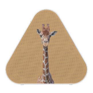 Cute giraffe face