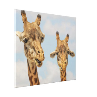 Cute giraffes canvas print