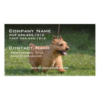 Cute Glen of Imaal Terrier Pack Of Standard Business Cards