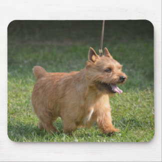 Cute Glen of Imaal Terrier Mouse Pad