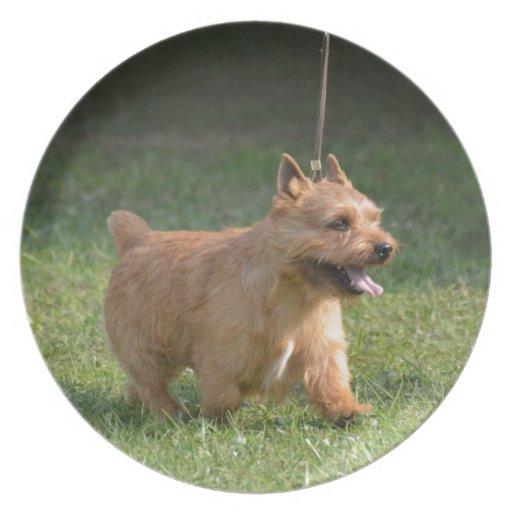Cute Glen of Imaal Terrier Party Plate
