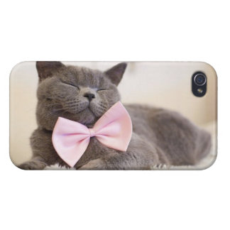 Cute Gray Kitten Cover For iPhone 4