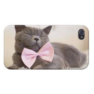 Cute Gray Kitten iPhone 4 Case