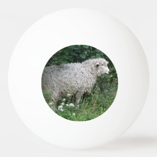 Cute Greedy Sheep Eating Ping Pong Ball