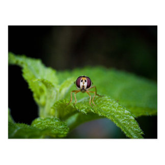 Cute Green Bug-Eyed Insect Postcard