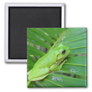 Cute Green Candid Frog On The Leaf Of Palm Fridge Magnet