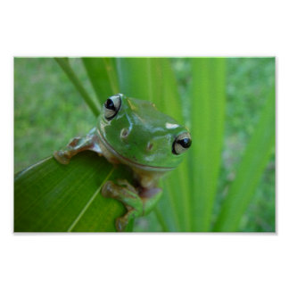 Cute Green Candid Frog On The Leave Posters