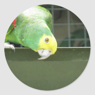 Cute Green Cheeky Parrot Watch Something By Loweri Round Stickers