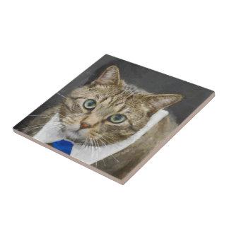 Cute green-eyed brown tabby cat wearing a blue tie ceramic tile