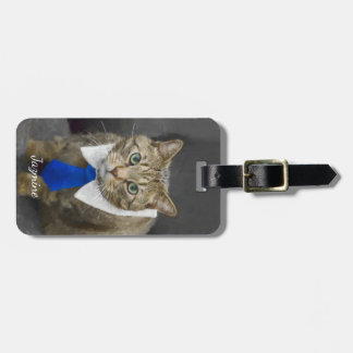 Cute green-eyed brown tabby cat wearing a blue tie luggage tag